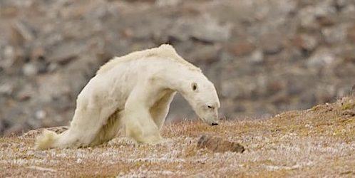 Cambiare per il clima
